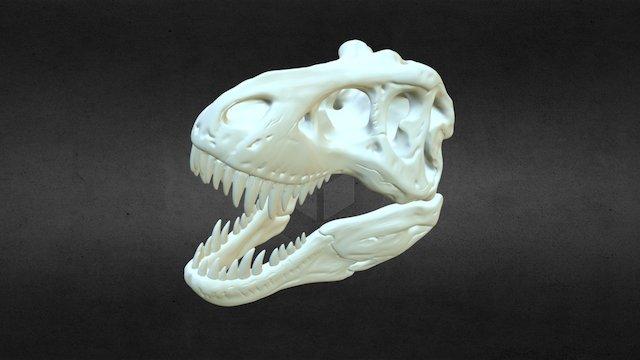 T- Rex Skull 3D Model