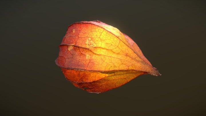 Glowing Wintercherry Photogrammetry 3D Model