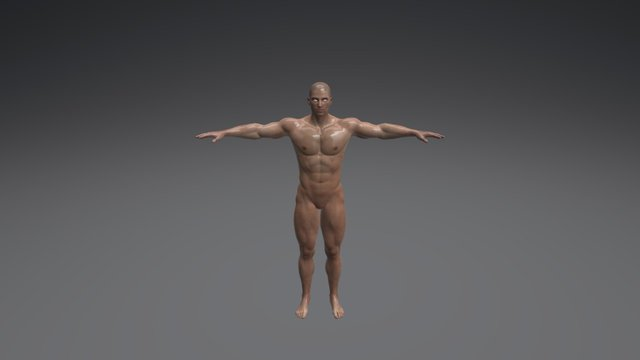 Male Drawing Poses 005 (Body Builder) 3D Model