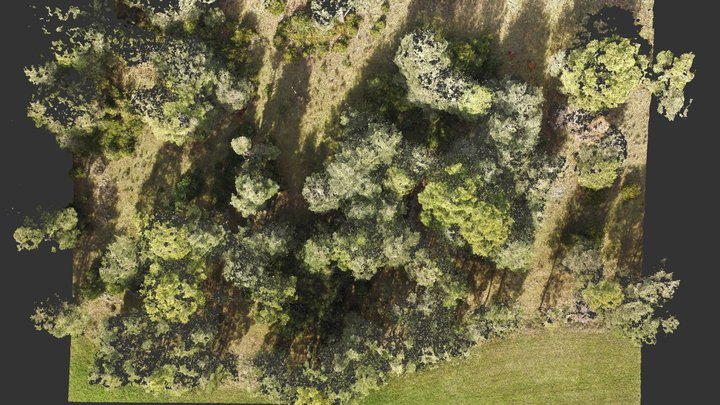 Núvol de punts d'un bosc de pins a Lladurs 3D Model