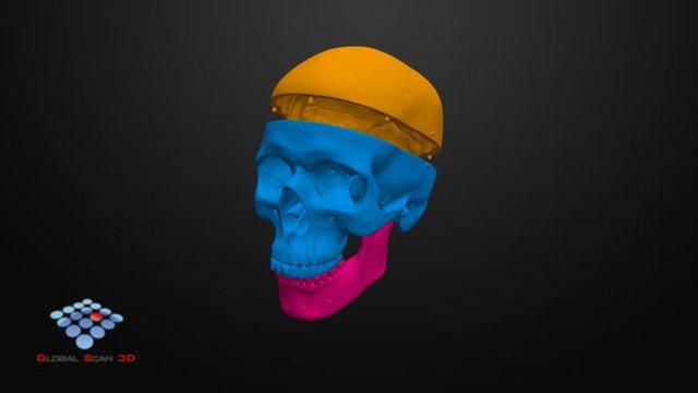 Craneo/Skull 3D Model