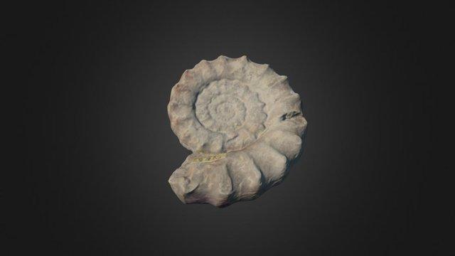 Xipheroceras ziphus 3D Model