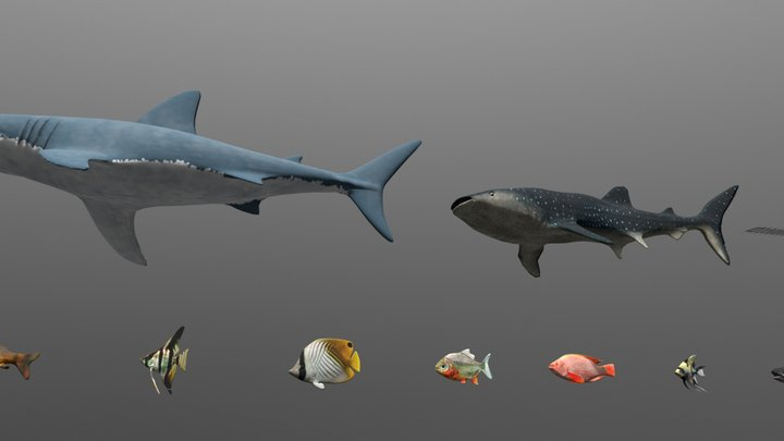 20 models / Fish Pack / Animal Collection 3D Model