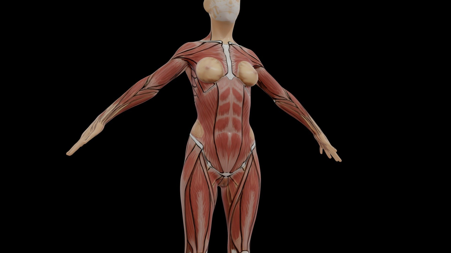 Female Muscles Reference 3d Model By Asknarin Asknarin 2b919e7 Sketchfab
