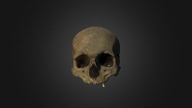 Skull, 10th century 3D Model
