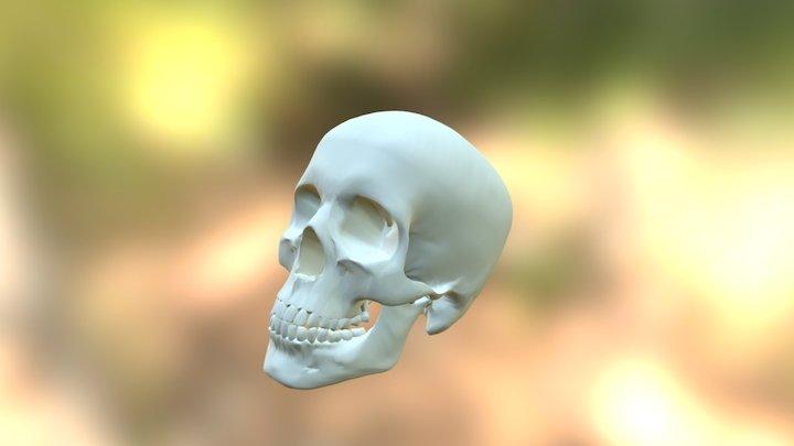 Skull Fill Build Space 3D Model