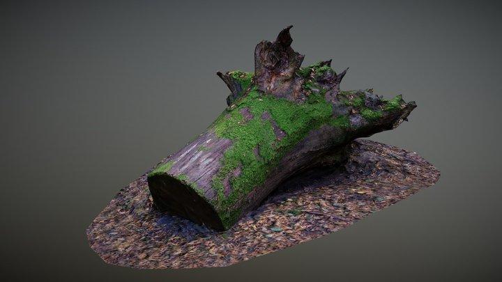 Mossy tree trunk 3D Model