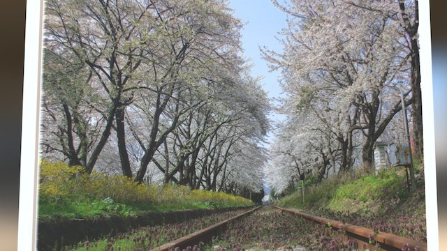 Train Track Sakura Tunnel 3D Model