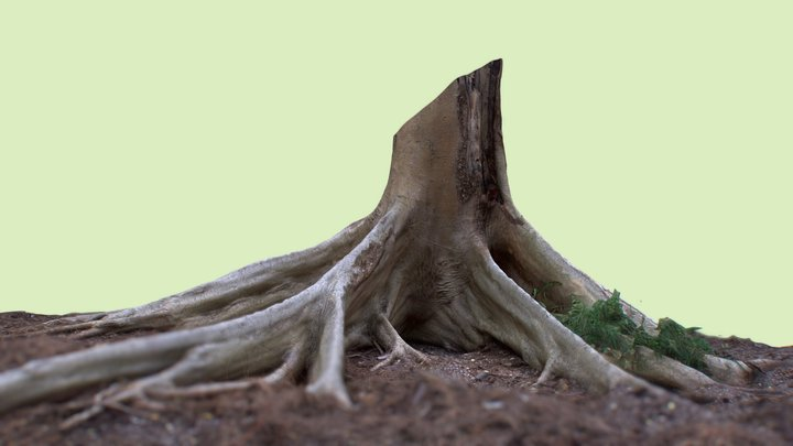 Thai Forest - Tree Roots 3D Model