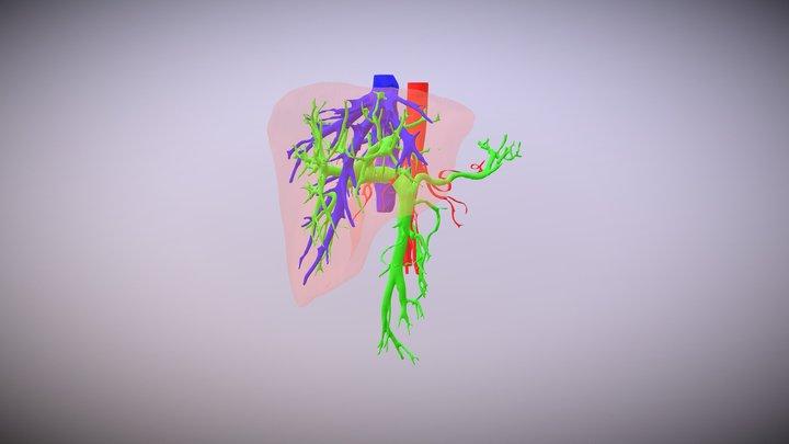 Karaciğer Segmentasyon 3D Model