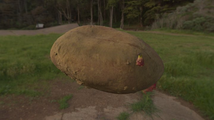 Kartoffel_01   //   potato 3D Model