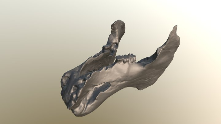 Crenatosiren extinct sea cow mandible CCNHM 202 3D Model