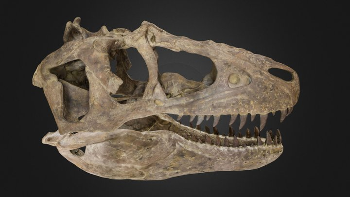 Juvenile Teratophoneus curriei 3D Model