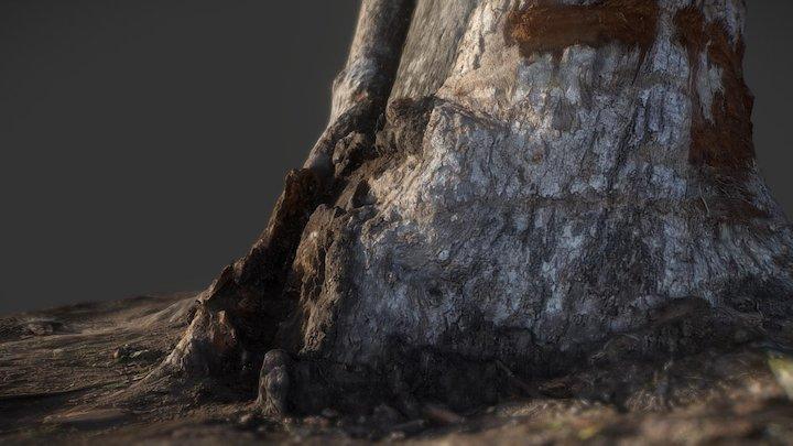 WCP Tree 91 Decimated 3D Model