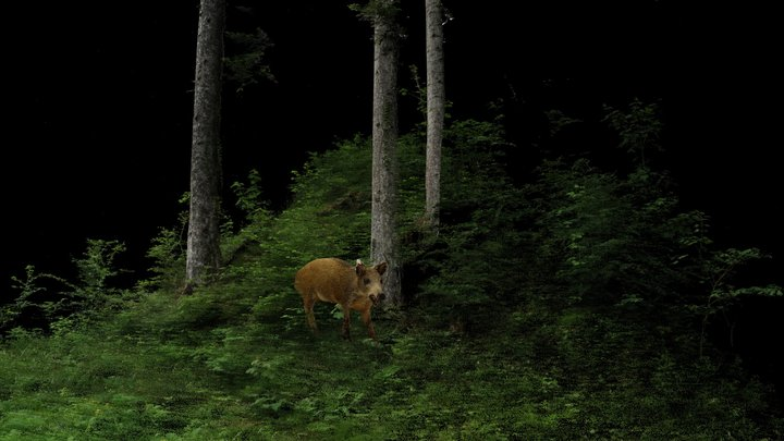 Wild Boar | The Forest and it's Inhabitants 3D Model