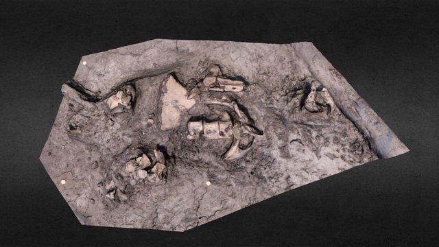 Part of a horse skeleton 3D Model