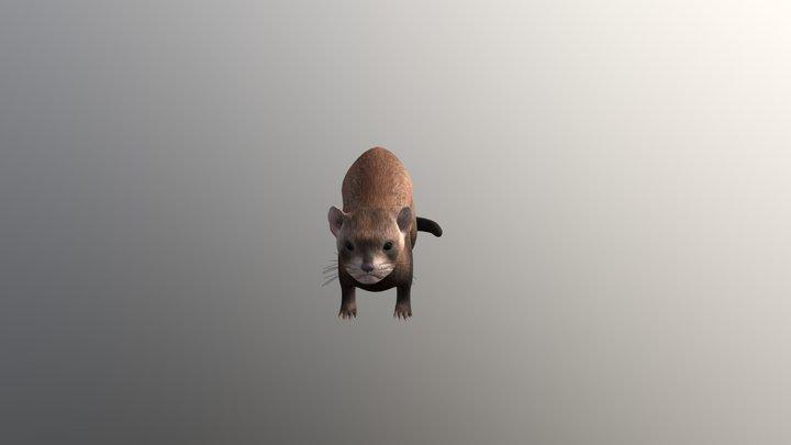 Ferret 3D Model