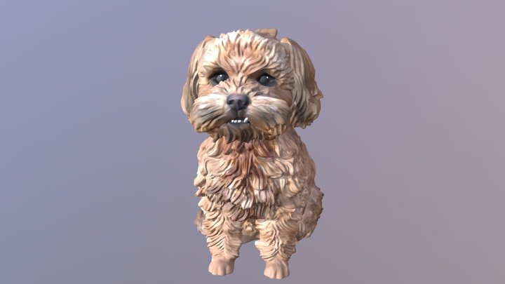 1811014- Fang- Shih Tzu Poodles 3D Model