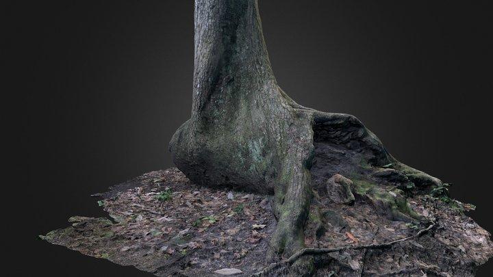 Tree Base 3D Model