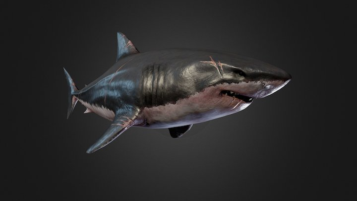The Great White Shark 3D Model