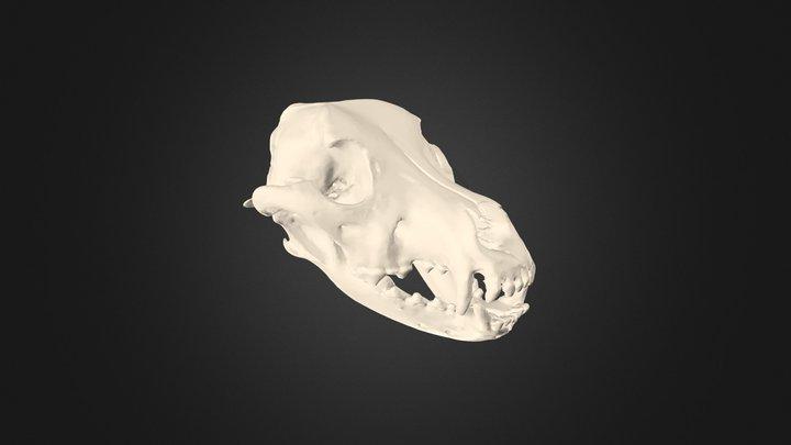 Canine Skull 3D Model