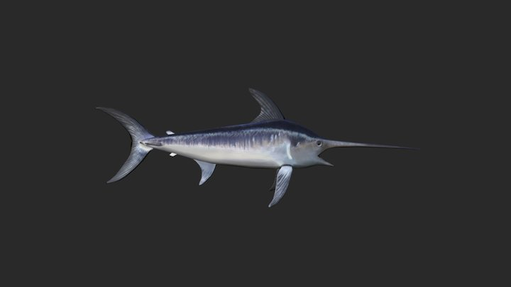 Swordfish 3D Model