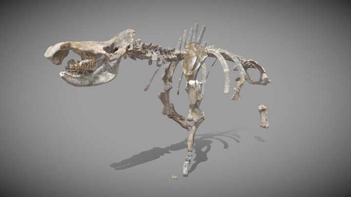 Woolly rhinoceros 3D Model