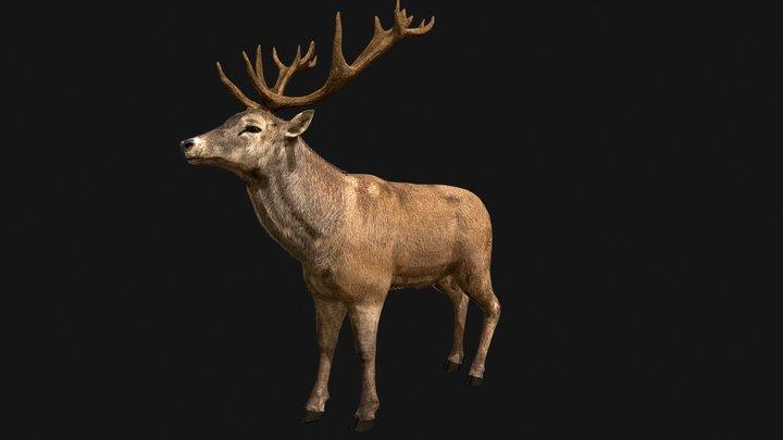 Deer Red 3D Model