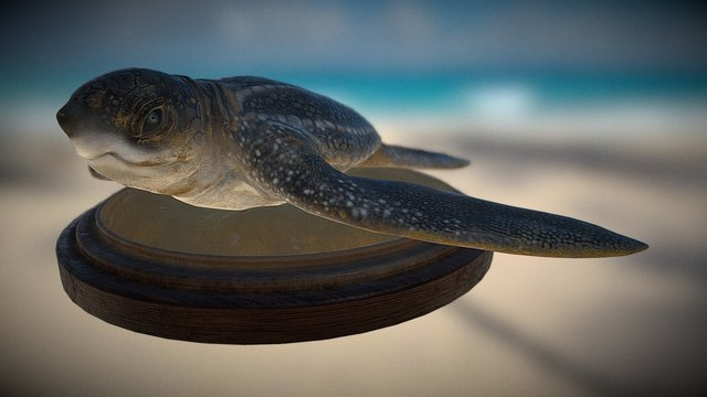Leatherback Turtle 3D Model