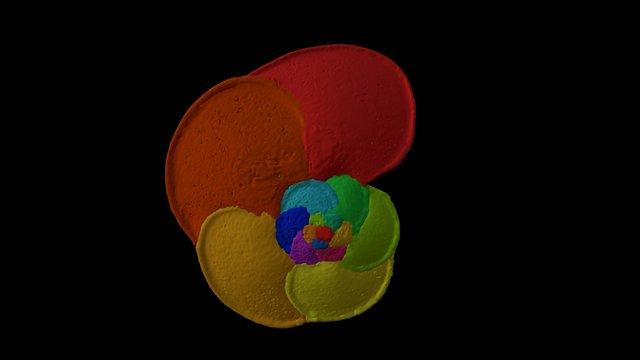 Globorotalia menardii 3D Model