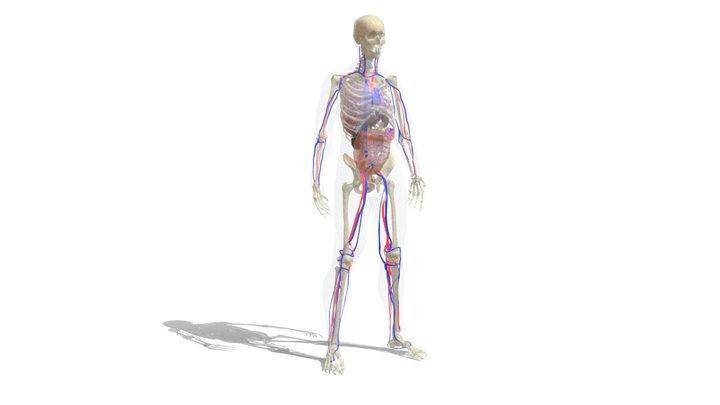 Sem (EN) 3D Model