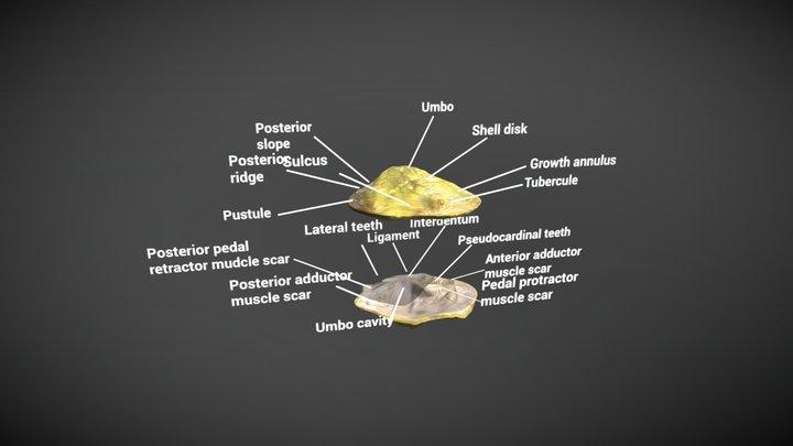 Mussels 3D Model