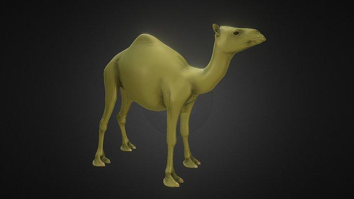 Camel 1 3D Model