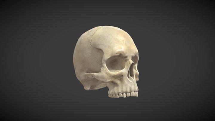 Skull for VR Project 3D Model