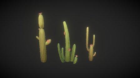 Cactus 3D Model