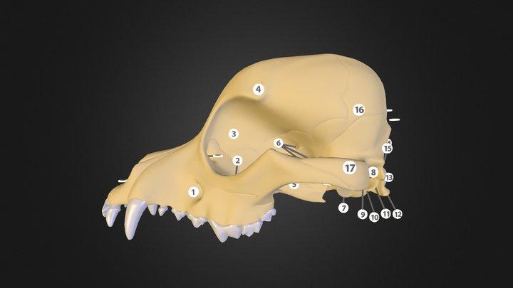02 3D Model
