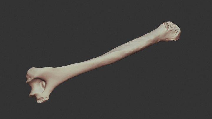 HUMERUS 3D Model
