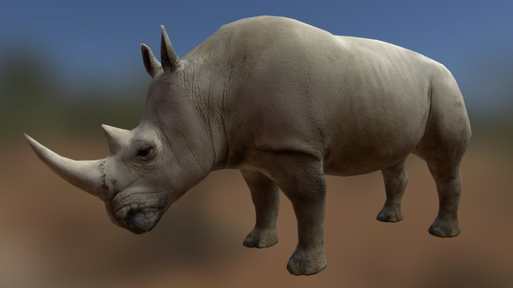 Rhino (old) 3D Model