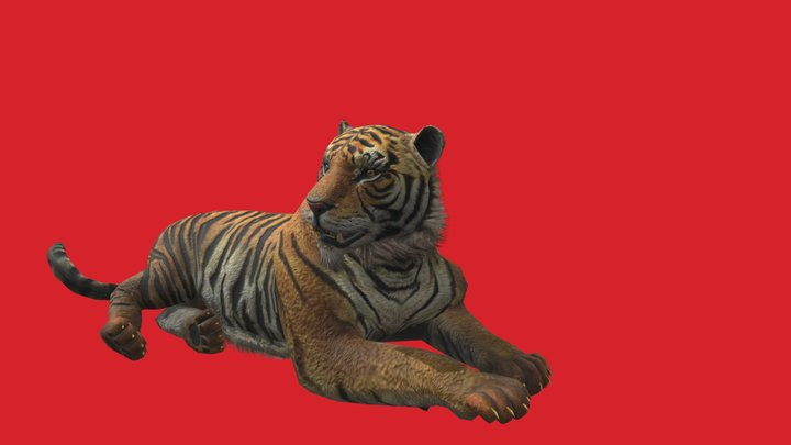 Bengal Tiger Animated 3D Model