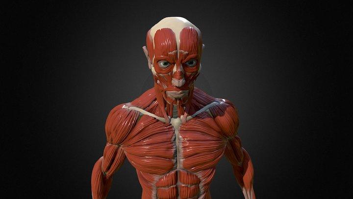 Ecorche Anatomy 3D Model