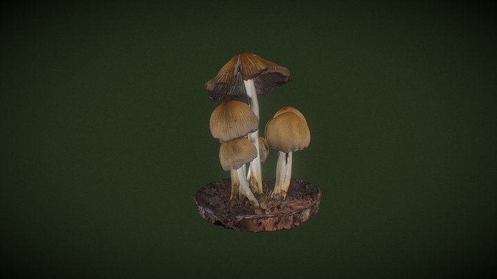 Real Fungus 3D scan - Coprinellus sp. 3D Model