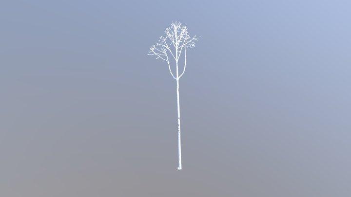 Tree 38 Slow 3D Model