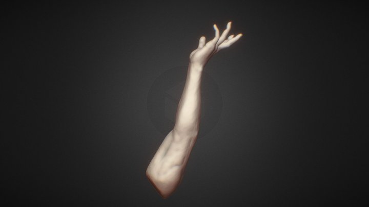 Forearm Study 3D Model