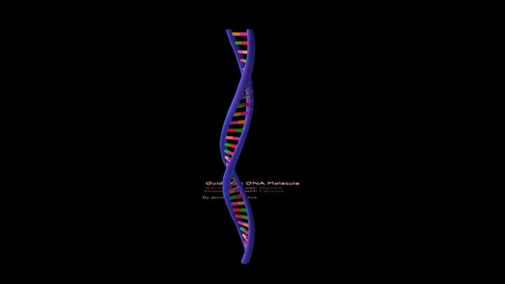 Guide to a DNA Molecule 3D Model