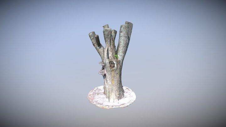 Mushroom Tree 3D Model