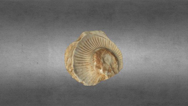 Rastro fósil, Cuenca (España) 3D Model