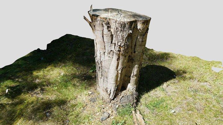 Treestump 3D Model