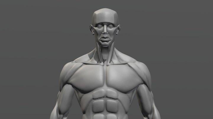 Anatomy Sculpt 3D Model