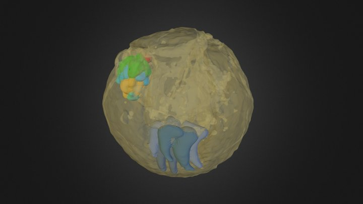 Markuelia lauriei 3D Model