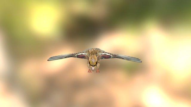 Animated Sparrow 3D Model